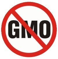 Gmo research paper ideas